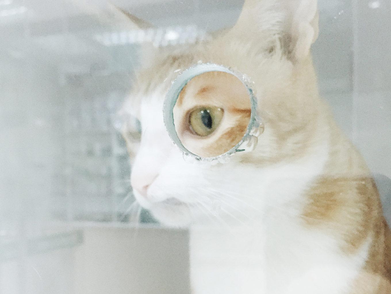 1分钟教你7个保护眼睛的小技巧